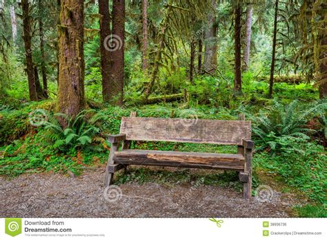 bench in forest empty log bench in the forest stock photo image of