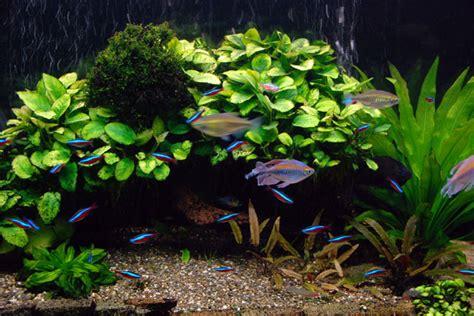 aquarium tropical plants aquarium plants and ornaments
