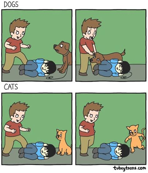 why do cats and dogs fight the true differences between dogs and cats dhtg