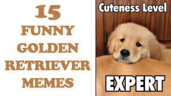 Golden Retriever Meme - funny golden retriever memes www imgkid com the image