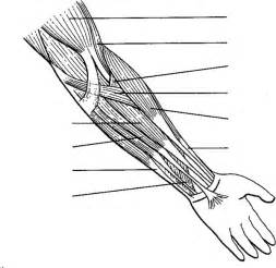 human anatomy arm coloring pages human anatomy arm coloring pages bulk color