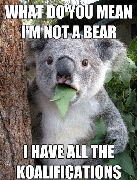 Koala Bear Meme - koala lauraagudelo272