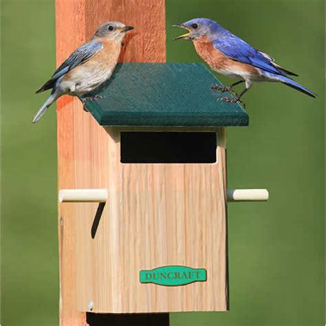 sparrow resistant bluebird house plans bird houses plans joy studio design gallery best design