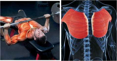 add 50 pounds to your bench chest exercises archives gymguider com