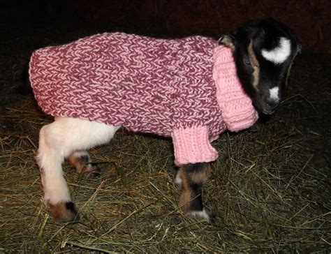 pattern for knitted goat sweater knit or crochet sweaters and hats for other pets free