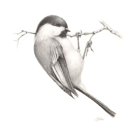 libro bird art drawing birds sketch birds drawing birds pencil sketch birds pencil sketch hd image drawing art drawings