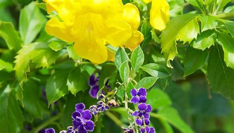 heat loving plants 17 best images about yard on pinterest desert ideas