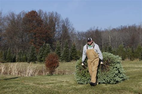 christmas tree farms with real estate in monroe or carbon county pa samaria tree farm the blade