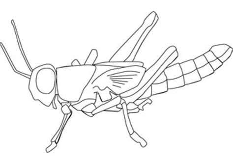 locust diagram coloring pages
