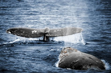 whale watching is every year from november to may