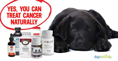 the cancer cure diet for dogs using the ketogenic diet to prevent treat and cure cancer in your furriest family member books all categories daposts