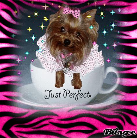 yorkie rate yorkie picture 126422513 blingee