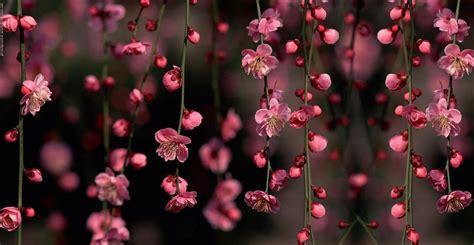 imagenes vintage flores imagenes vintage flores para fondo celular en hd 11 hd