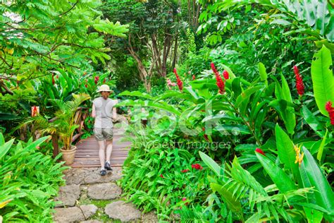 andromeda botanic gardens andromeda botanic gardens barbados stock photos