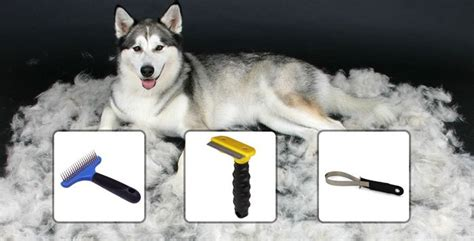 how to a husky how to groom your husky snowdog guru