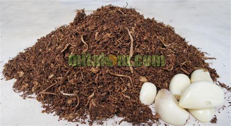 membuat zpt nabati pestisida alami tembakau dan bawang untuk mengendalikan