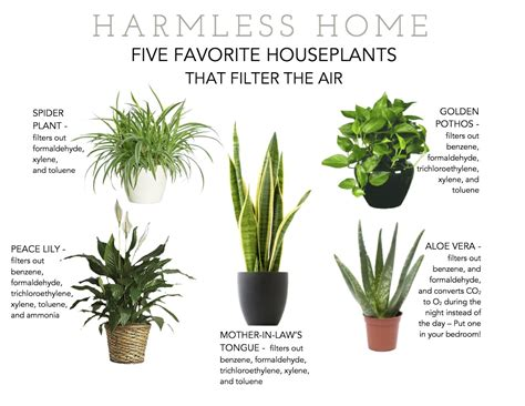 House Plants Safe For Cats | flowering indoor plants safe for cats thin blog