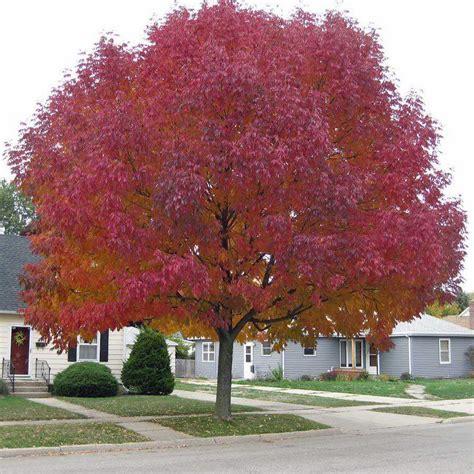 imagenes de jardines en otoño 10 225 rboles para jardines peque 241 os