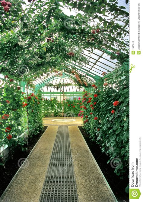 interior layout of a greenhouse greenhouse interior royalty free stock photo image 1585915