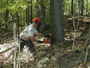 pin coupe de bois les fournisseurs grossistes et