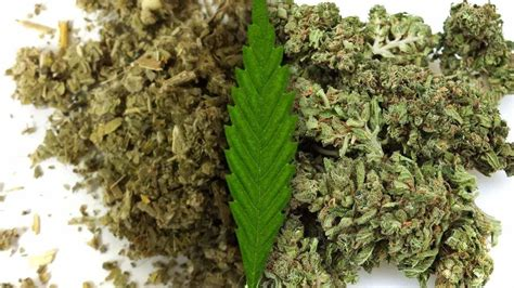 What Is The Difference Between Ma Mba And Msc by How To Tell The Difference Between Cannabis And Synthetic