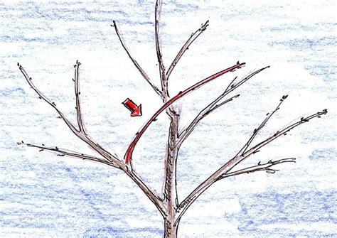 wann schneidet apfelbã ume apfelbaum schneiden apfelbaum herbst apfelbaum schneiden