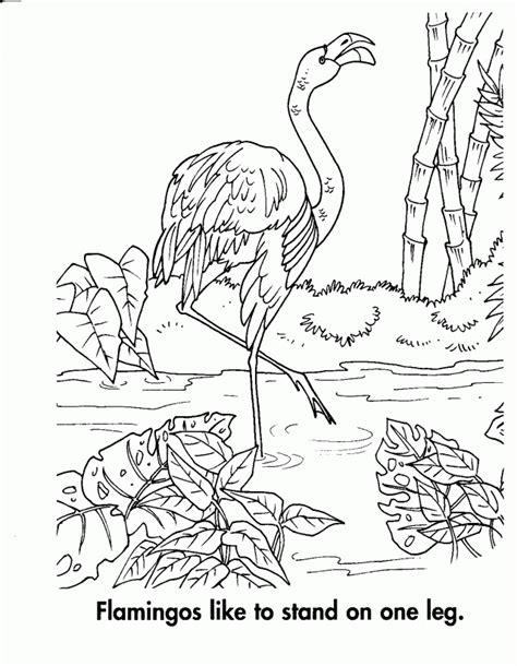Animal Habitat Colouring Pages Rainforest Habitat Animal Habitat Coloring Pages