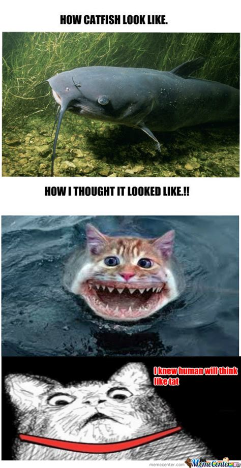 Catfish Meme - catfish memes best collection of funny catfish pictures