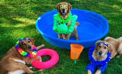 dogs in pool 5 ways to help your pup stay totally chill this summer