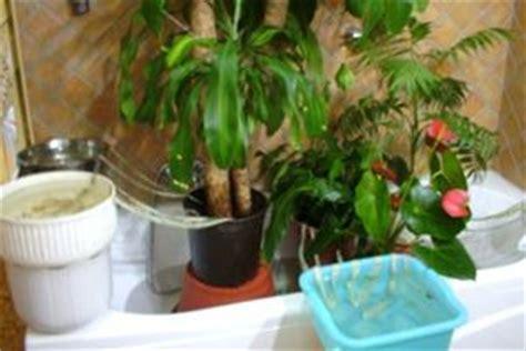 quanto bagnare le orchidee i migliori metodi per annaffiare le piante quando partite
