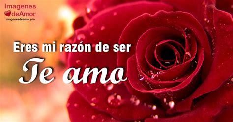 las mas hermosas fotos de rosas con poemas de amor image gallery imagenes de rosas