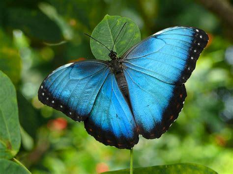 wallpaper for desktop butterfly butterfly desktop backgrounds butterfly desktop