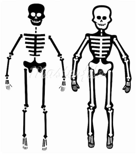 skeleton layout exles human body clipart panda free clipart images