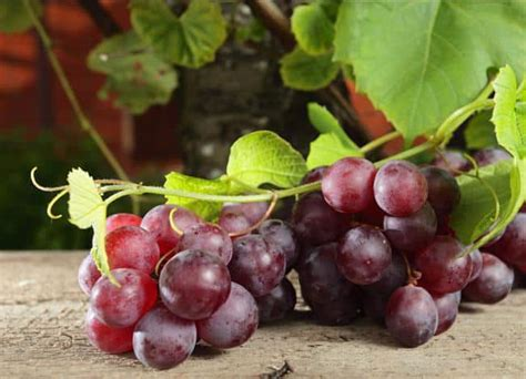 carbohydrates grapes what are the health benefits of grapes
