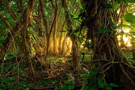 Jungle Light Jpg 900 215 600 Of The Iguana