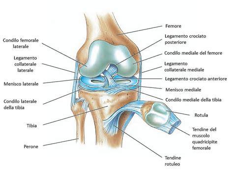 collaterale interno ginocchio ginocchio movimento benessere