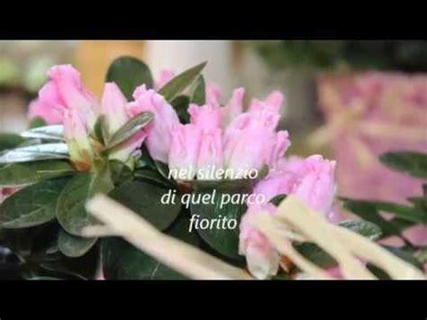 fiori di marzo fiori di marzo fiori di primavera