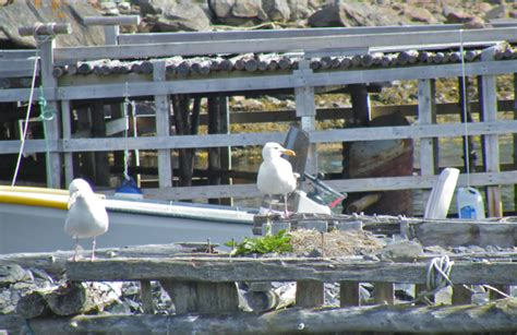 mullowney s boat tours a wandering week in newfoundland part 2 of 4 eastern