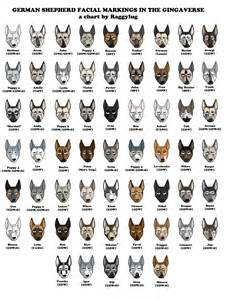 german shepherd color chart colors and markings breeds picture