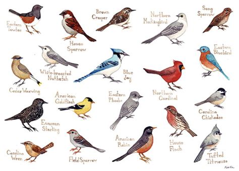 different types of birds that sing what are the different types of singing birds what are some notable exles quora