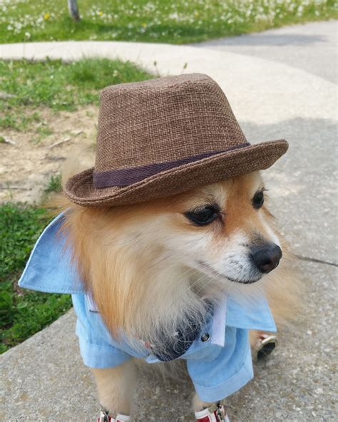 hats for dogs fedora for dogs cats handmade hats by puppydoggyclothes