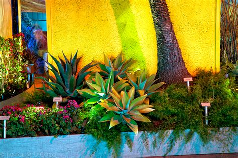mexico way at the 2013 san francisco flower and