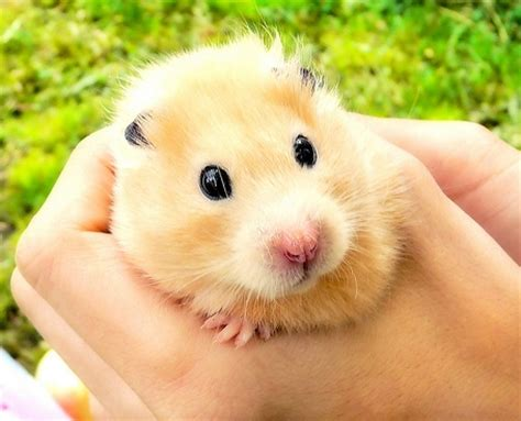 7 Kid Friendly Pets by Hamster 7 Best Pets For Families With Lifestyle