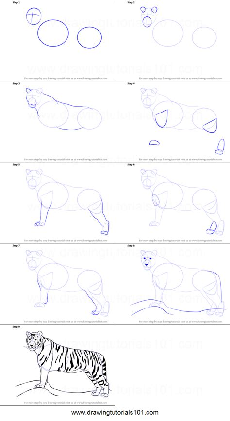 doodle draw step by step drawing tigers step by step coloring europe