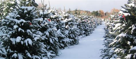 best christmas tree farm applehill prices best 28 apple hill tree apple hill growers the apple hill original tree