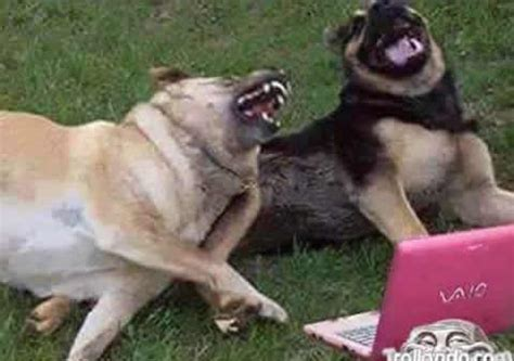 Dog Laughing Meme - dogs laughing blank template imgflip