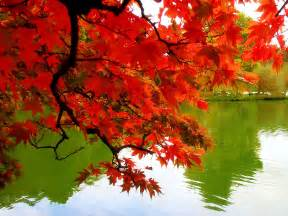 falling colors angie s ad lib delicious autumn