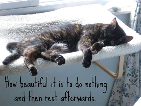 A Cat On A Sunday by Day Of Rest Sunday Quotes Quotesgram