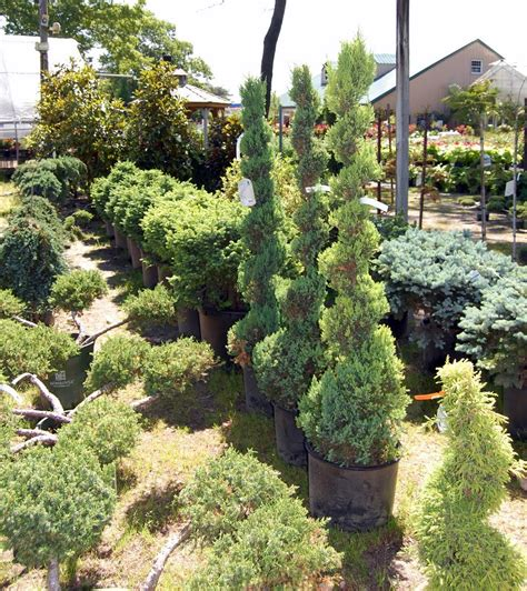 cheap sams plant bargains photo album