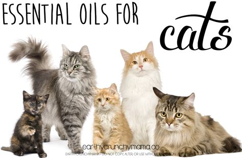 essential oils and cats earthy crunchy mama